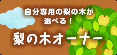 梨の木オーナー